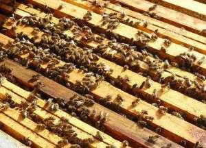 Du nouveau dans la réglementation « abeilles »
